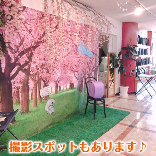 カワノジャパンランドセル店内お気軽にご来店ください。